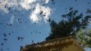 Bienen vor Flugloch_1