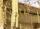 Bienenflug im Frühling_4