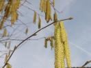 Bienenflug im Frühling_6
