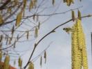 Bienenflug im Frühling_7